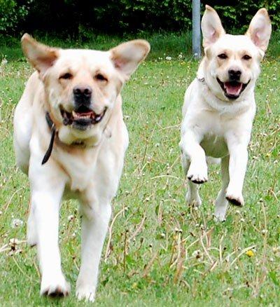 Oskar & Charlie