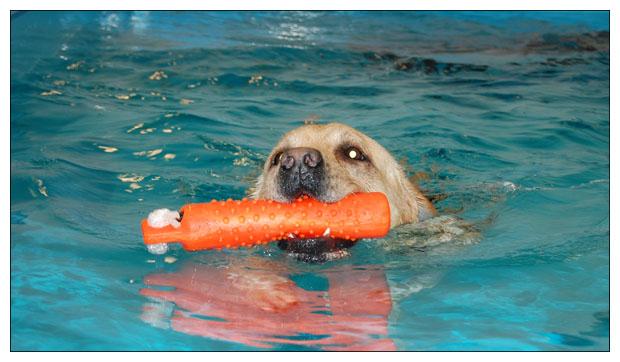 Nöjd Oskar på simmet